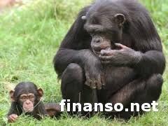 Ученые из США создали вакцину от обезьяньего СПИДа - выводы