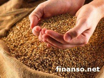 Производство зерновых в Украине за год выросло на 27,1%
