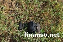 Мужчина в Севастополе бросил в горящий костер несколько боевых снарядов - последствия