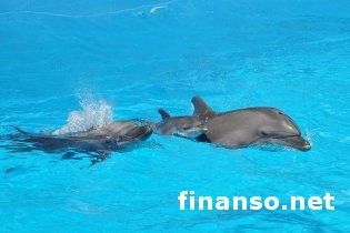 Власти Крыма арестовали всех морских животных местного дельфинария
