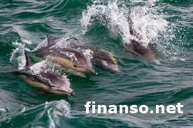 Биологи нашли новый вид дельфинов