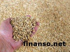 В 2020 году Украина экспортирует 41 млн. тонн зерновых - Минагрополитики