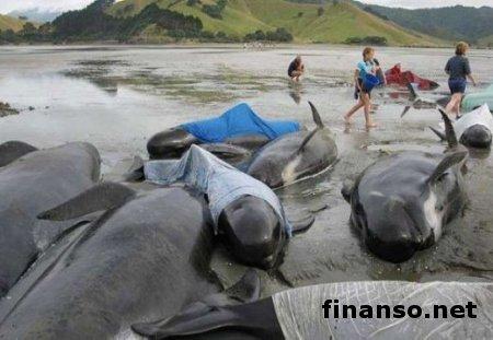 На восточное побережье США массово выбрасываются дельфины