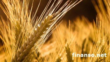 Минагропрод: В Украине собрано 55,6 млн. тонн зерна - выводы
