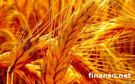 Крестьяне в Украине увеличили производство сельхозпродукции на 6 %