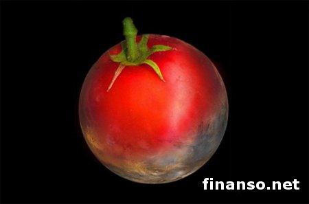 Ученые смогли вырастить огурцы и помидоры на грунте из Марса – выводы