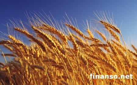 Украина по экспорту зерновых может занять второе место в мире - Янукович
