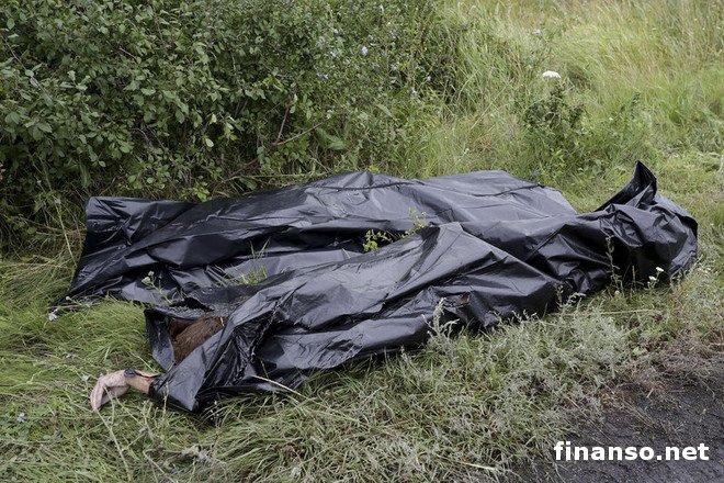 фото тел погибших боинга под донецком